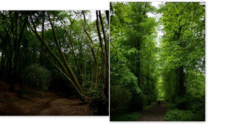 Woodlands In Surrey