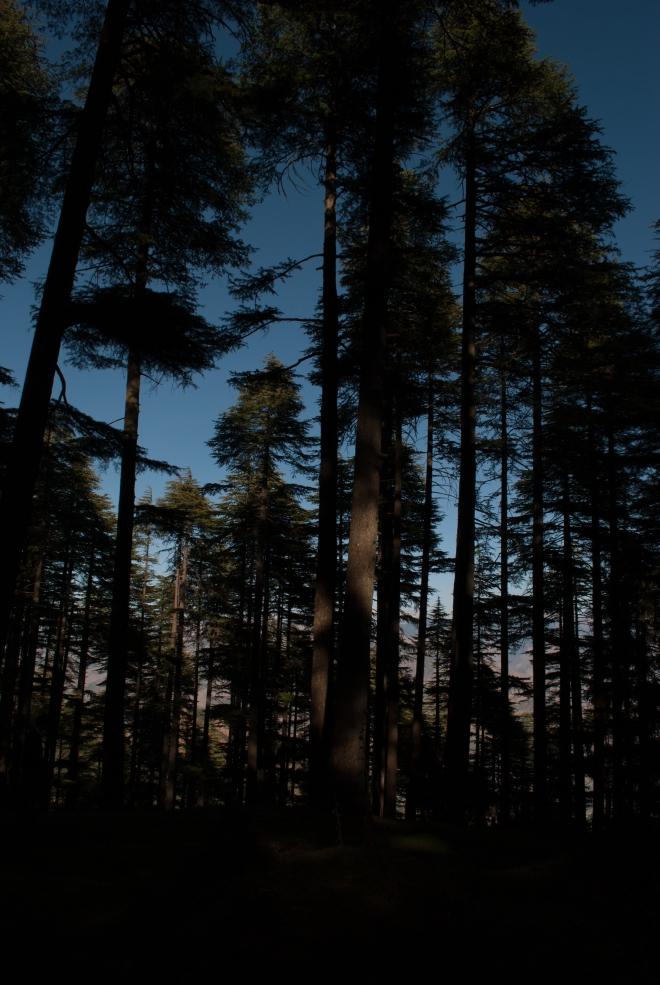 Kalatop Forest